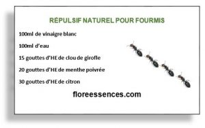 solutions naturelles pour loigner les fourmis floreessences. Black Bedroom Furniture Sets. Home Design Ideas