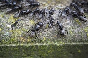 Solutions naturelles pour éloigner les fourmis